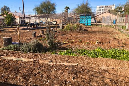 Garfield Community Garden just after planting